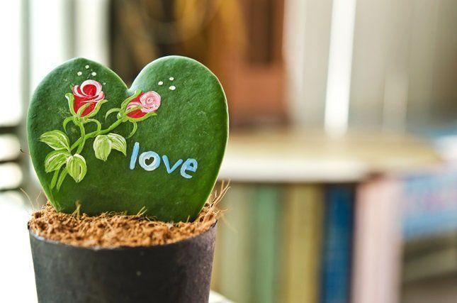 Хойя Керри – идеальное растение для новичков