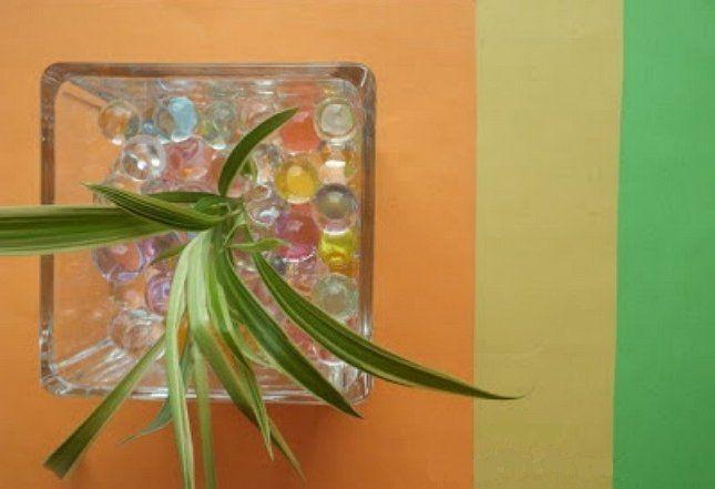 Растение в гидрогеле