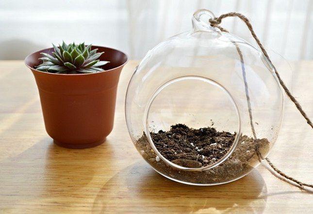 Вместо почвы для суккулентов можно использовать универсальный грунт