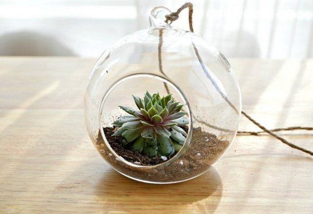 Растение в стеклянном шаре выглядит очень необычно