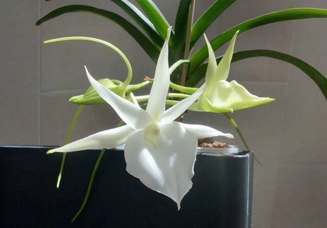 Грамотный уход способствует красивому цветению