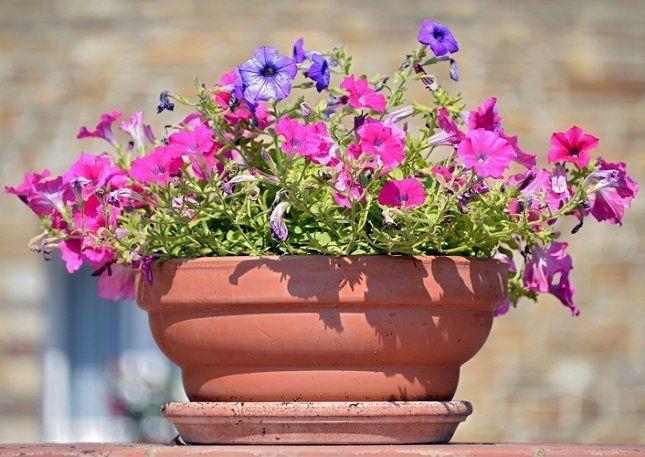 Контейнер для посадки садика для бабочек можно выбирать любой