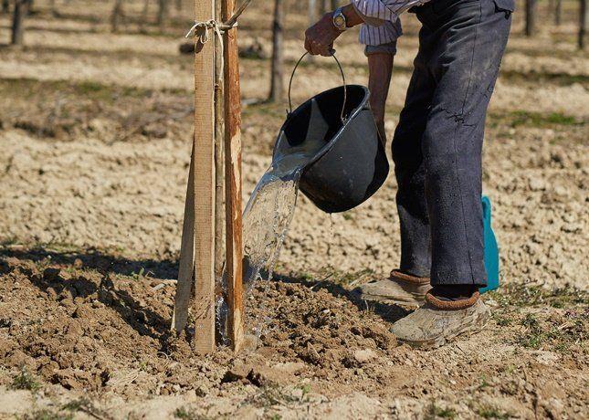 Для основного внесения под садовые и огородные культуры используются простой и двойной суперфосфат
