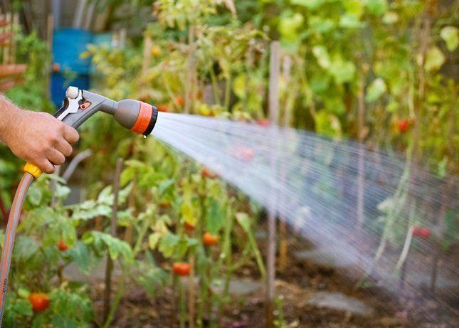 Смывание белокрылки водой
