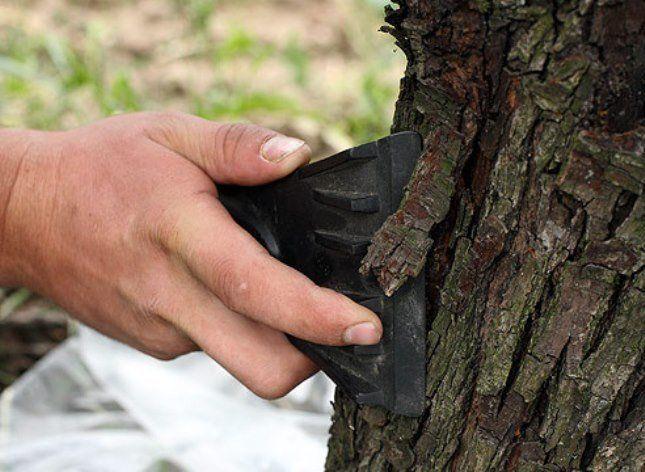 Первым делом удаляют кору, мох и лишайник со ствола