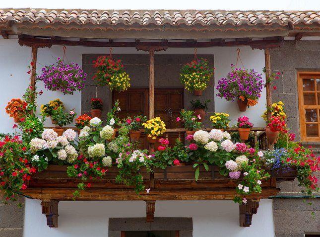 Вынося растения на балкон, очень важно не перестараться