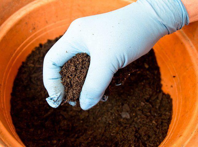 Составляя почвосмесь, следует ориентироваться на требования растений к грунту