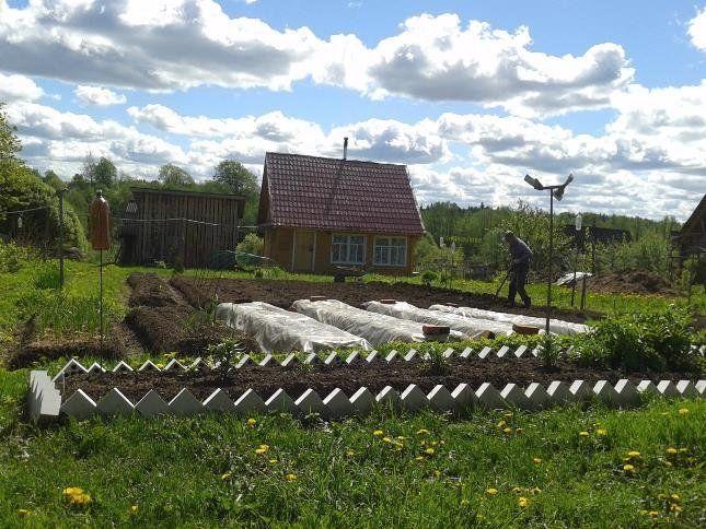 Грядки в огороде