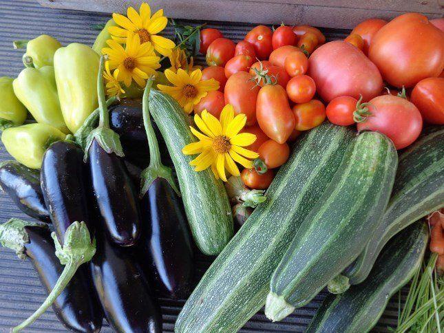 Баклажаны, кабачки, перец и помидоры