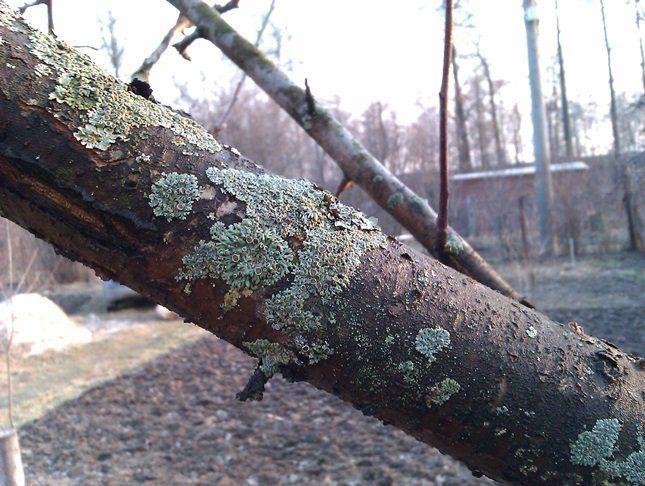 Влажная среда благоприятна для развития грибковых заболеваний