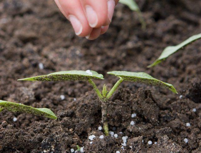 Перекорм кальцием и магнием вызывает аномалии в развитии листьев