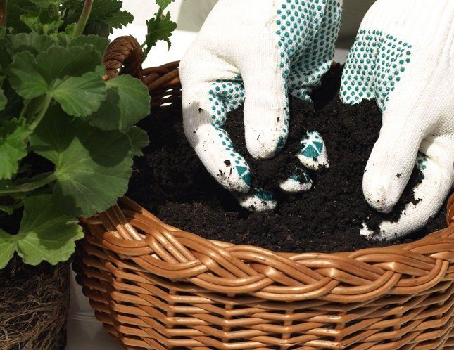 Подбирая грунт, ориентируйтесь на предпочтения вашего растения