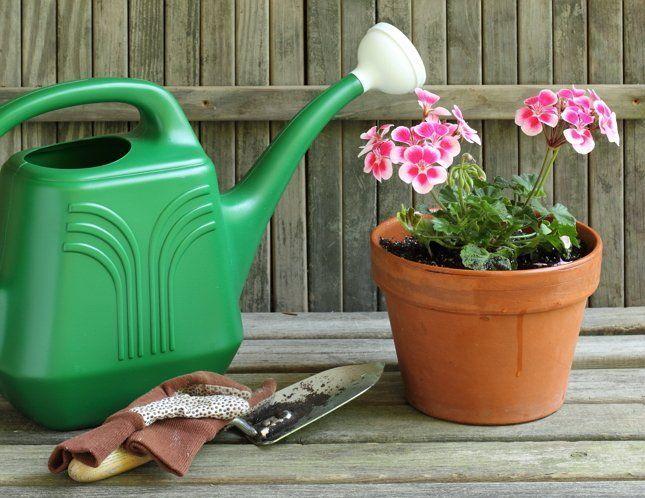 В жаркое лето цветы любят обильный полив, а вот с подкормками важно не перебарщивать