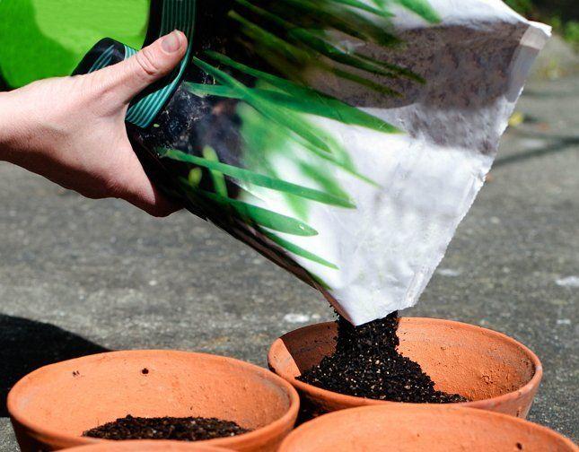 Магазинные универсальные смеси подходят для большинства комнатных растений