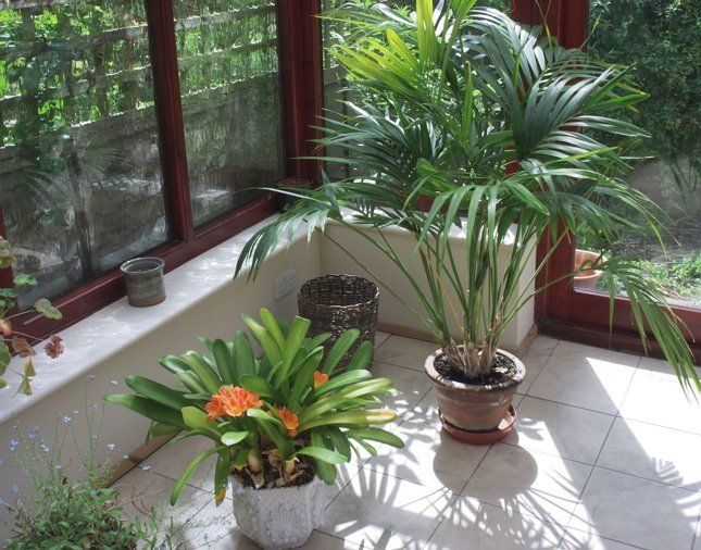 Для зимнего сада на северной стороне стоит выбирать декоративнолистные растения