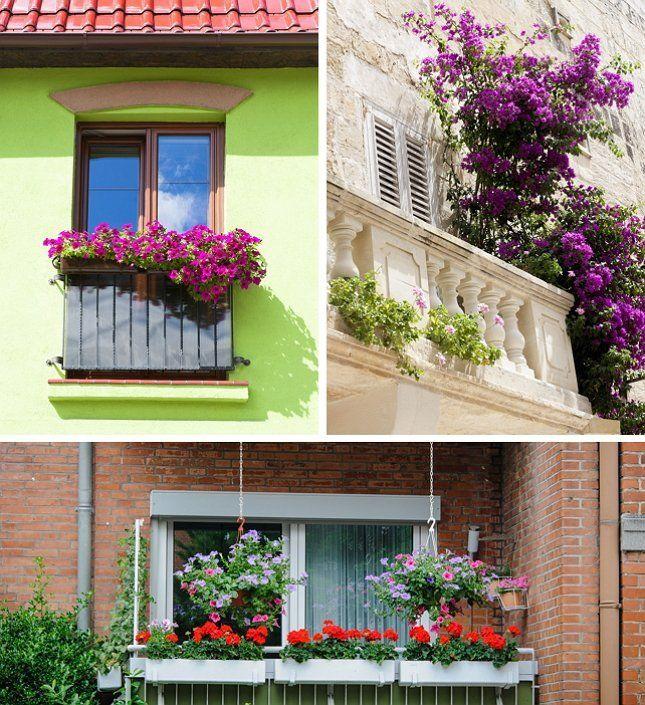 Растения на балконе должны гармонировать с отделкой стен