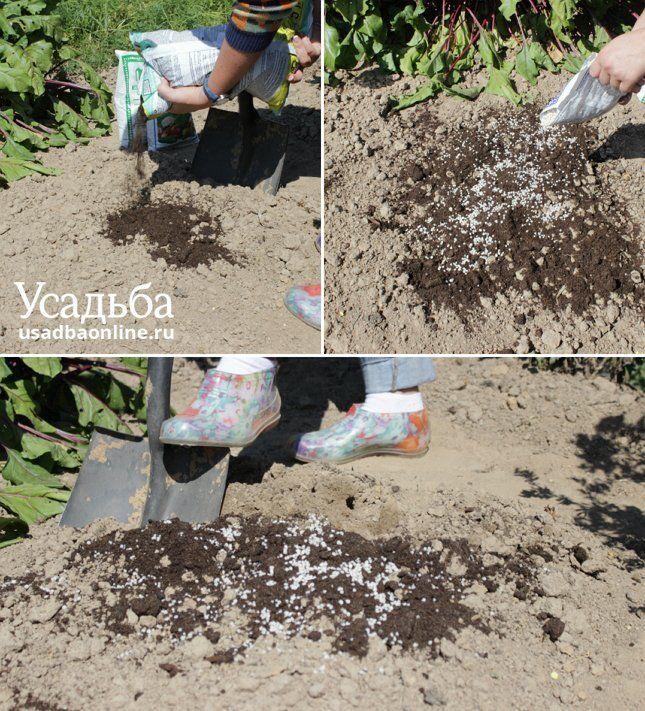 Последовательность внесения удобрений в глинистую почву
