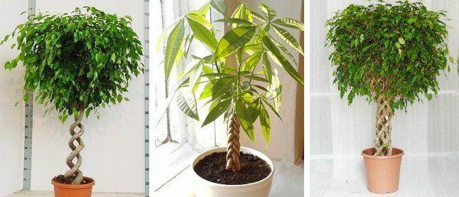 Разные виды формировки стеблей