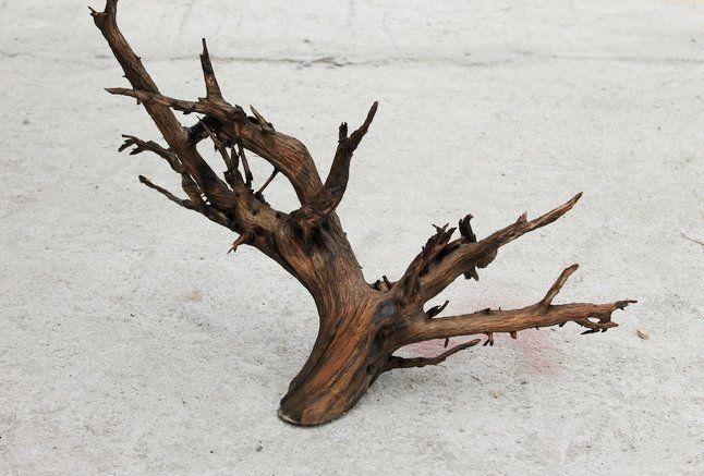 Корягу для бромелиевого дерева выбирайте необычной формы