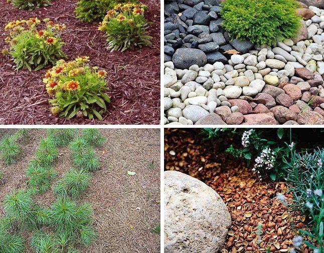 Каждому растению следует подбирать определенную мульчу