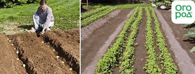 Как сделать чертилку для посадки картофеля 17