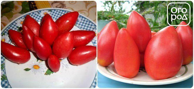 томаты, помидоры Супермодель