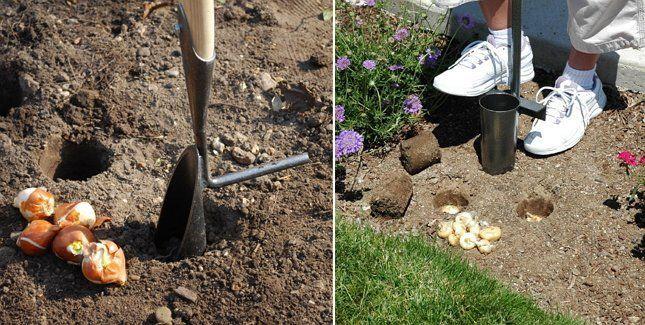 Как сделать сажалку для луковичных своими руками