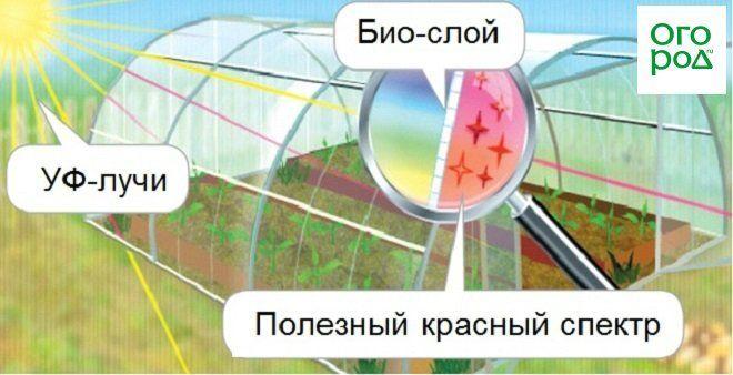 Принцип действия био-слоя