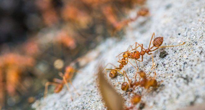 колония муравьев