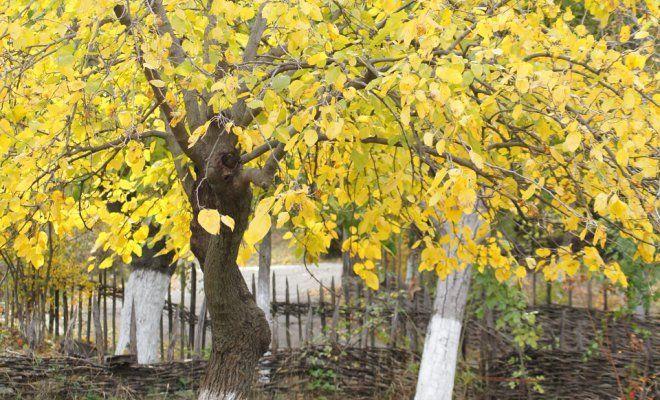 : Осенняя подкормка сада