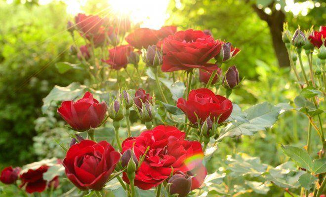 270Как растут цветы описание и