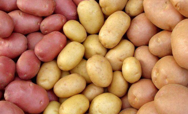 Картинки по запросу Картошка голландская