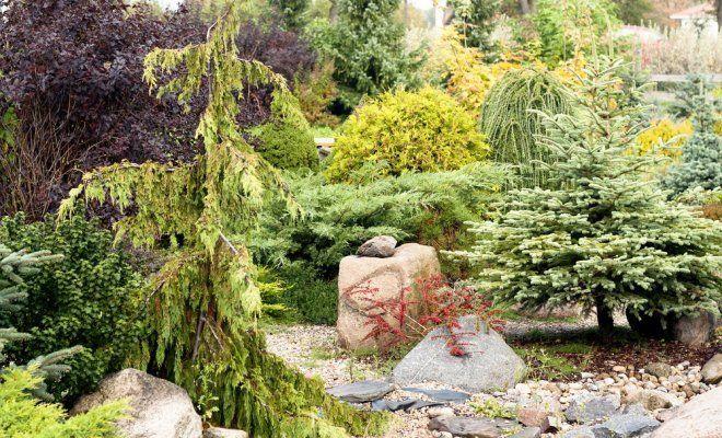 : Идеи ландшафтного дизайна с хвойниками