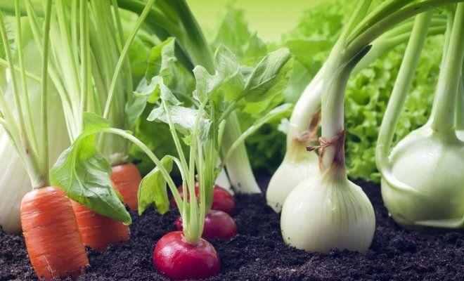: Смешанные посадки лука, редиса и моркови