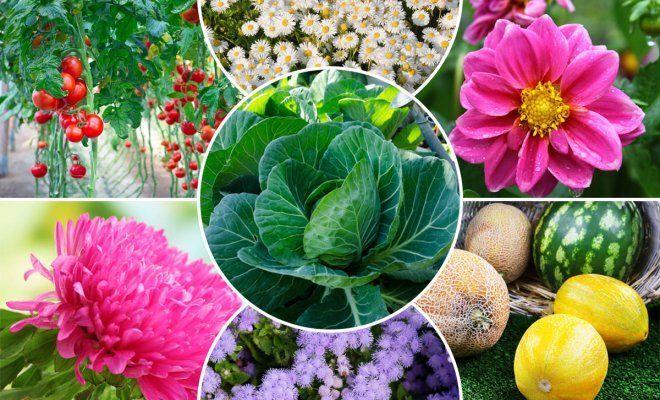 : Коллаж из овощей, ягод и цветов
