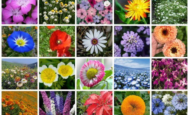 Какие цветы можно сажать в открытый грунт семенами 17