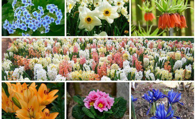 Когда в августе пересаживать цветы