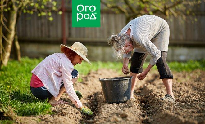 : посадка картофеля в июле