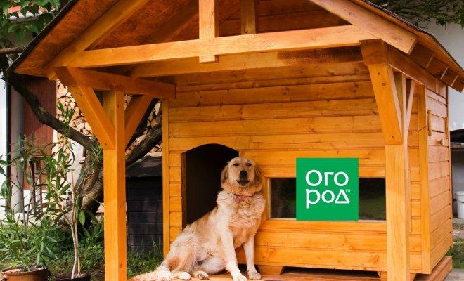: Собака в большой будке