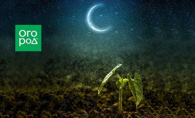 : росток и луна