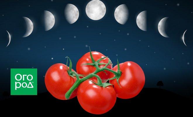 : томаты, лунный календарь