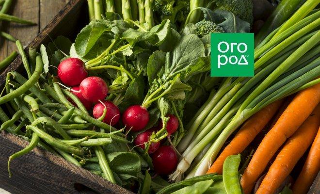 : свежие овощи