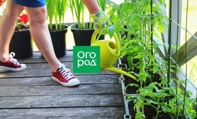 : Огород на балконе: во что сажать овощи в квартире