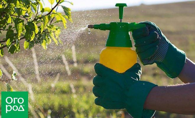 : разрешенные пестициды для личного хозяйства