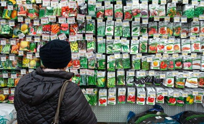 : Покупка семян для посева