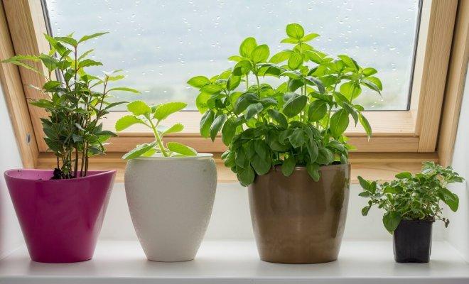 : Растения для выращивания на подоконнике