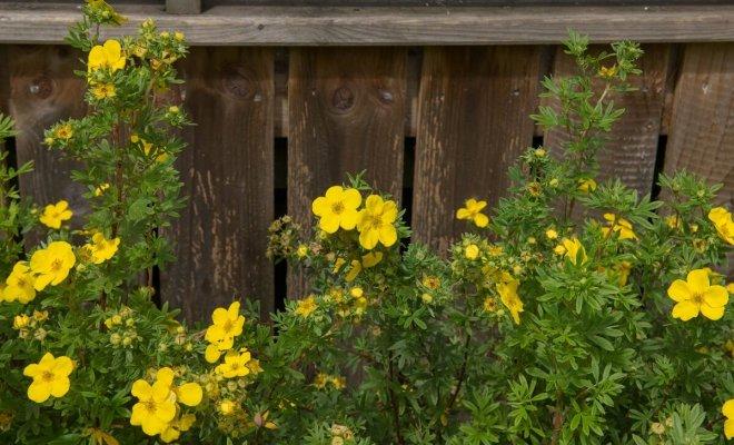: Низкорослые кустарники для небольшого сада