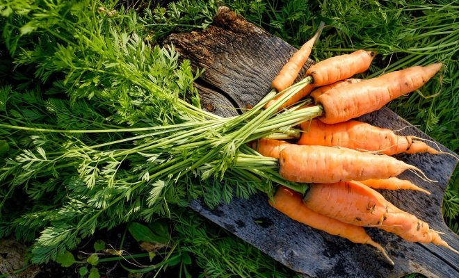 : Инструкция по выращиванию моркови