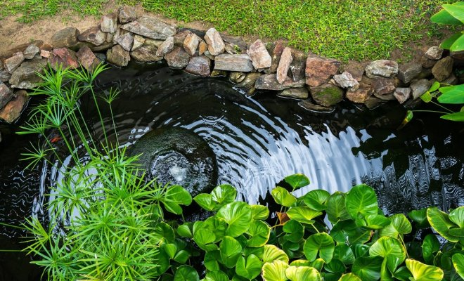 : Растения для водоема на даче