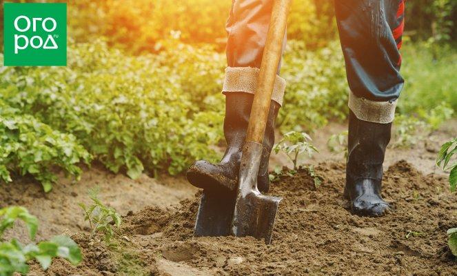 : Как делать плодородную землю из песка